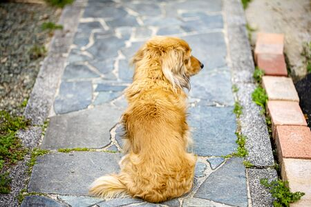 The dog is sitting and waiting for his master. but he look away. him distracted by something.Dog of the back figure. and on a pavement with stone.