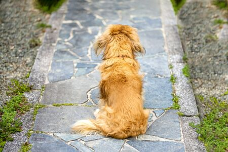 The dog is sitting and waiting for his master. Dog of the back figure on a pavement with stone.