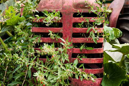 Close up of a rusty old tractor radiator grille with plants growing through it on a farm