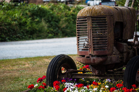 Old rusty tractor on a farm with blooming flower bed next to it