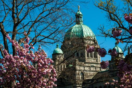 The British Columbia Parliament Building in Victoria, Vancouver Island, Canada in spring with blooming cherry trees