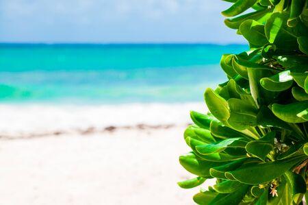 Empty beach, Caribbean sea, exotic plant, negative space, blurred background Standard-Bild