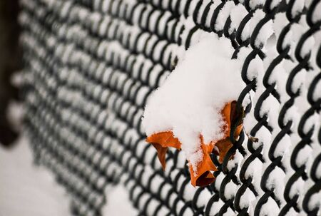 Orange maple leaf covered in snow hanging on metal mesh fence of a tennis court in the Stanley Park, Vancouver, Canada Standard-Bild