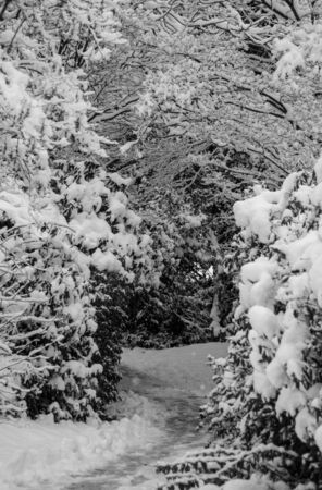 Empty snow covered pathway in the Stanley park, Vancouver Standard-Bild
