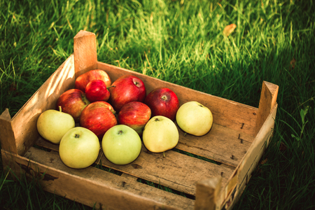 campesino: Mountain of apples standing on the wooden box in green grass in the garden. Summer color image. Circle bright bokeh. Five red apples.