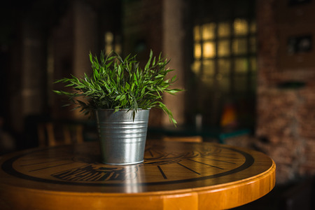 Wooden table in cafe on blurred Bokeh background as art digign work for cutted isolated objects of food. Bar check in the morning. Lifestyle concept.Green spring plant in metal iron pot bucket on desk Stock Photo