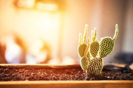 Close up view of green succulent in a clay pot in loft interior in cafe. Image with small field of depth. Photo with copyspace and light flare for text and design. Reklamní fotografie