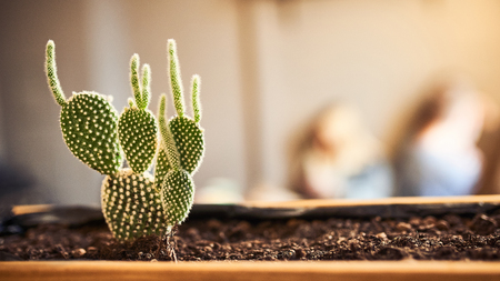 Close up view of green succulent in a clay pot in loft interior in cafe. Image with small field of depth and copyspace for text and design.Banner 16 in 9 crop size.
