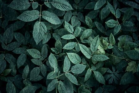 Trend dark green background with leaves. Plant in shadow. Copyspace for design