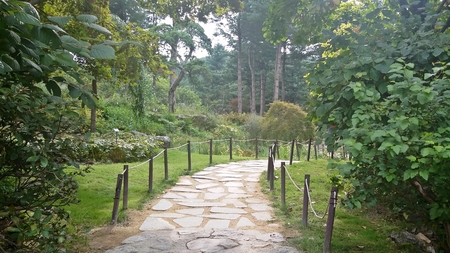 Steinstraße im Wald