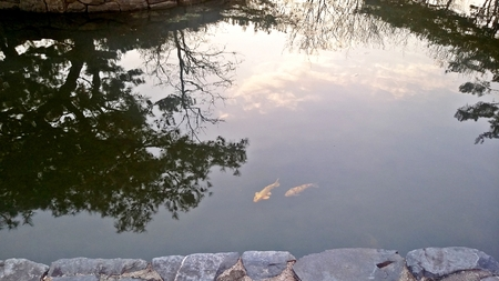 Sky reflected in water. And fish