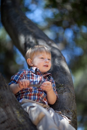 portrait of a 21 months old boy in a bright shirt sitting on a tree in a park on a sunny summer day photo