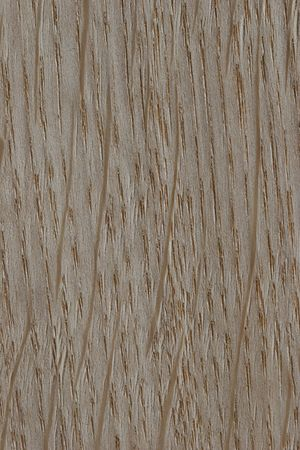 marquetry: Oak texture