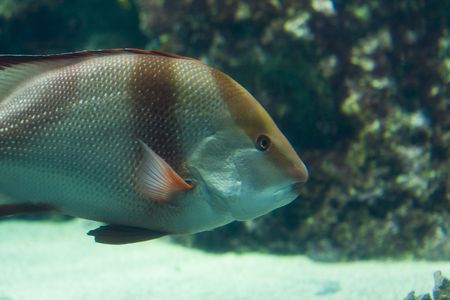 exotic fish: una nataci�n ex�tica de los pescados