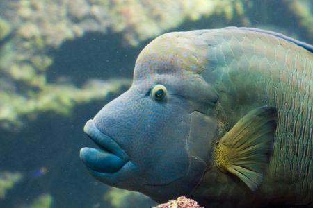 exotic fish: uno swimming esotici dei pesci Archivio Fotografico