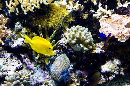 exotic fish: un pez ex�tico de nataci�n