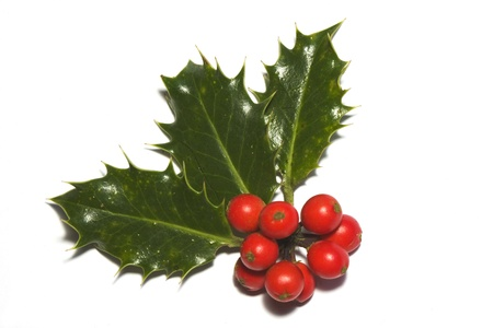 christmas holly: christmas holly, leaf and bay, isolated on white Stock Photo
