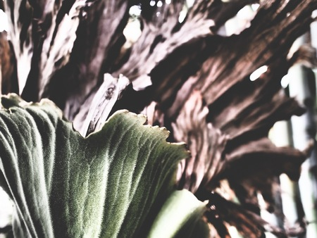 staghorn fern: This is a platycerium in the jungle