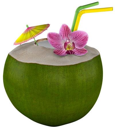 Green Coconut Nut Tropical 3d