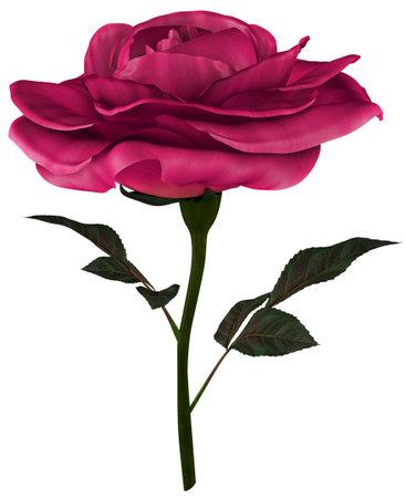 Red Rose White background 3D Render Stok Fotoğraf
