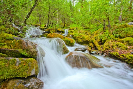 cascading waterfall in a forest river, altai, Russia photo