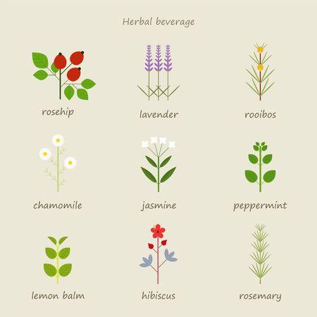 Types of herbal tea. flat design style minimal vector illustration.