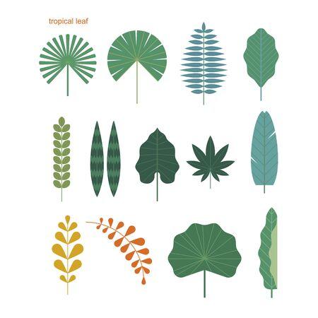 Ensemble de diverses feuilles tropicales. illustration vectorielle minimale de style design plat.