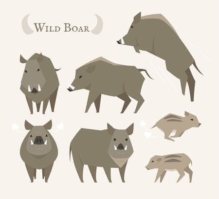 Wild boar character in various poses. flat design style minimal vector illustration.