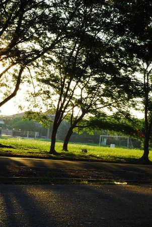 stroll: Evening stroll