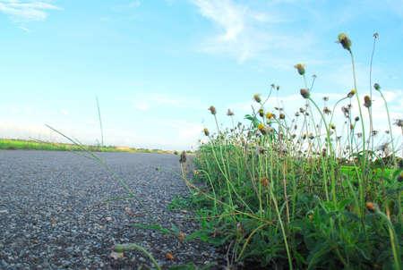padi: Padi field