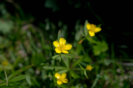 glades: flower