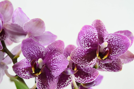 close up orchid flowers on white backgrounds