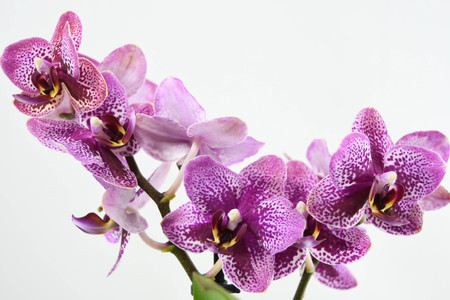 Close up of the orchid flowers on white backgrounds Imagens