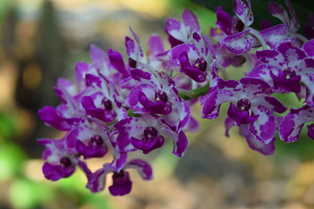 close-up of the orchid flowers and blur background