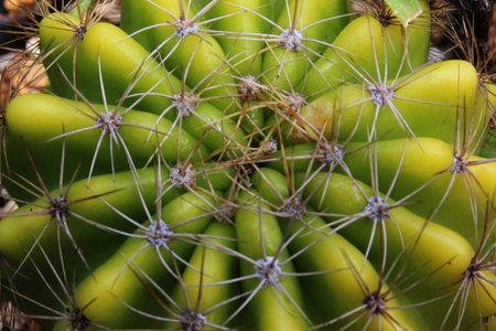 close-up of the cactus in the garden