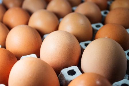 dozen: Dozen of Eggs Stock Photo