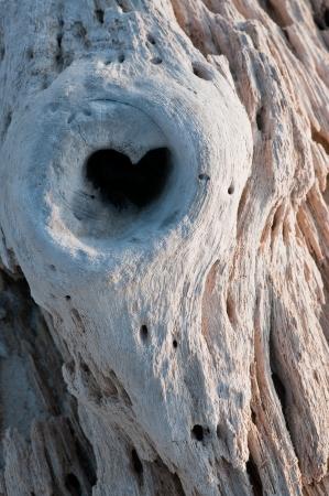 knothole: Heart-shaped knothole in stranded tree