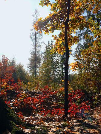 Autumn forest Stock Photo - 3083067
