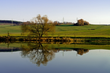 Broadleaved tree reflecting in a small lake photo