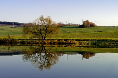 broadleaved tree: Broadleaved tree reflecting in a small lake