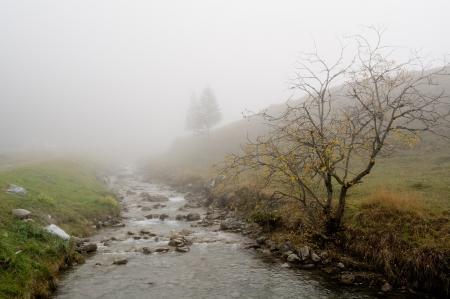 broadleaved tree: Broadleaved tree in a white autumn fog in Steg, Lichtenstein