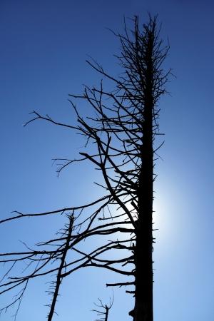 kwaśne deszcze: Sylwetka martwego drzewa z nieba lato w Skrzyczne, Polska Zdjęcie Seryjne