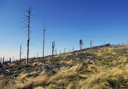 environmental issues: Landscape with Dead Old Trees in Poland, Beskid Slaski near the Skrzyczne peak