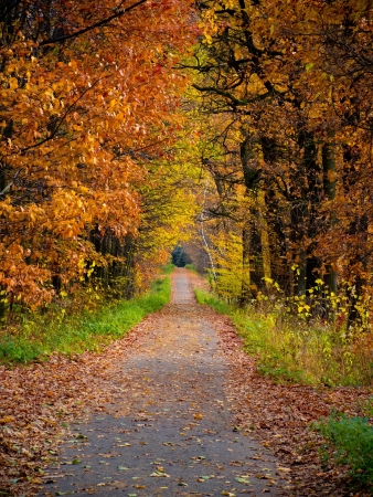 Concrete path in forest during warm autumn photo