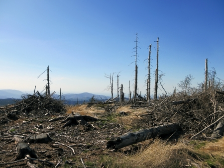 kwaśne deszcze: Krajobraz z Zmarli starych drzew w Polsce, Beskid Śląski, w pobliżu szczytu Skrzyczne