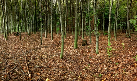 Wide angle panorama of deep autumn forest with lot of trees photo