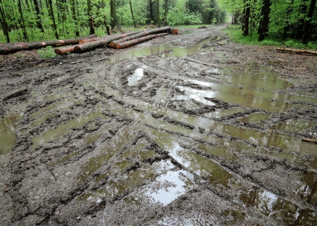 muddy tracks: Forest in the rain, muddy road with lorry tracks