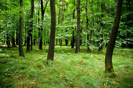 Deep green broadleaved forest shortly after rain
