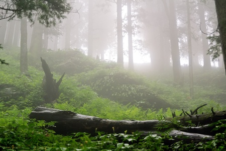 Deep foggy rainforest near Hatu Peak in India