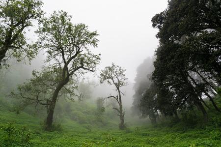 prespective: Prespective view of forest of Hatu Peak in India